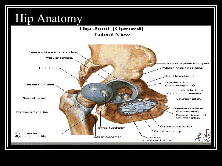 Total Hip Replacement (1)
