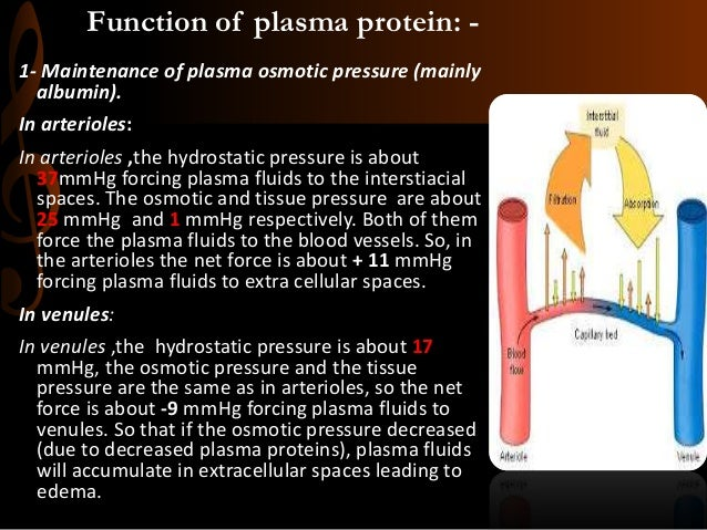 Function of plasma protein: - 1- Maintenance of plasma osmotic pressure (mainly albumin). In arterioles: In arterioles ,th...