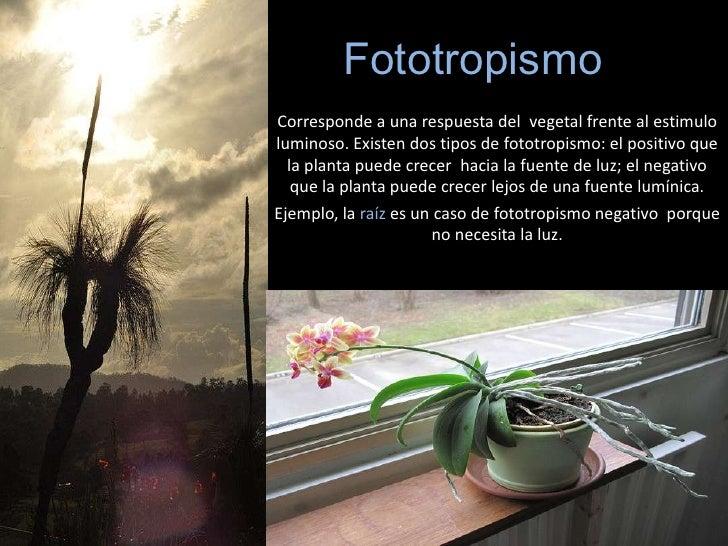 Que es fototropismo y ejemplos 38