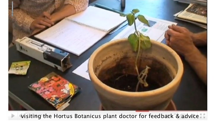 visiting the Hortus Botanicus plant doctor for feedback & advice