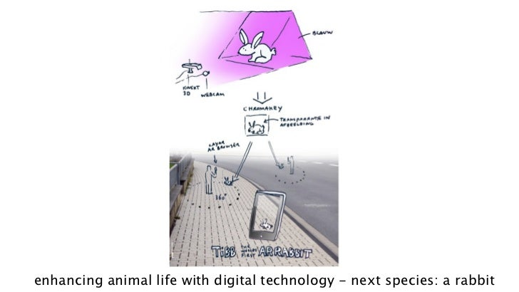 enhancing animal life with digital technology - next species: a rabbit