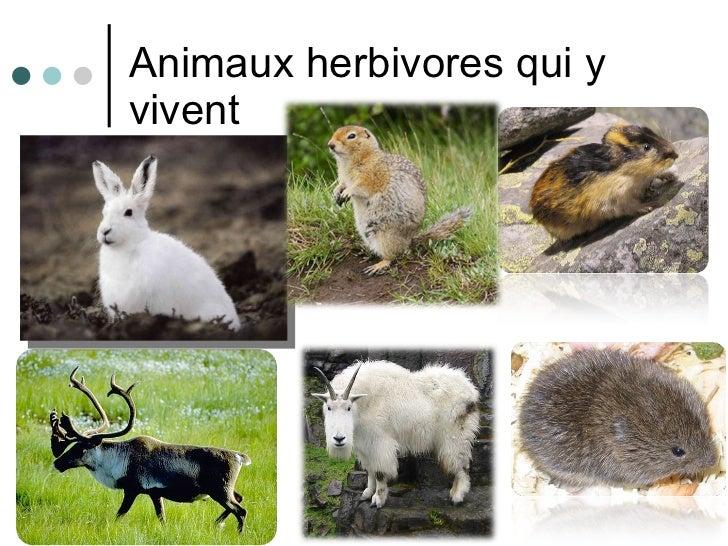 Animaux herbivores qui y vivent