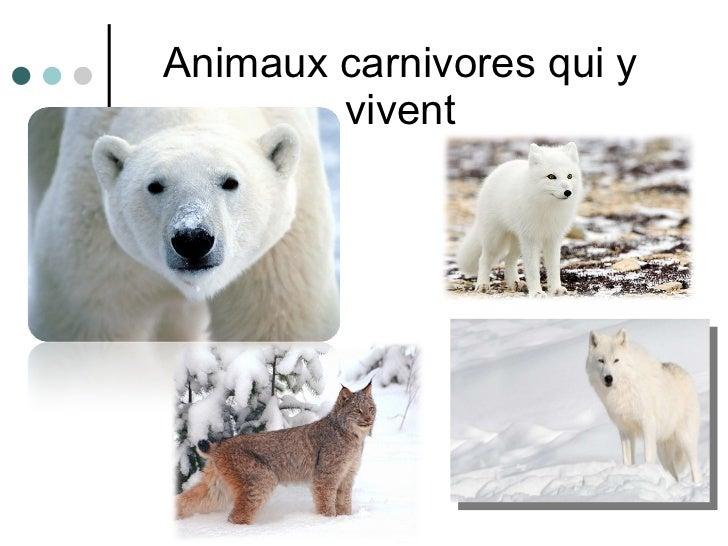 Animaux carnivores qui y vivent
