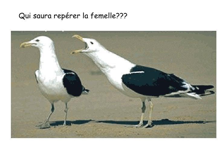 Qui saura repérer la femelle???