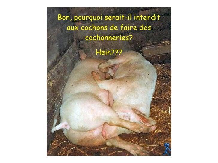 Bon, pourquoi serait-il interdit aux cochons de faire des cochonneries? Hein???