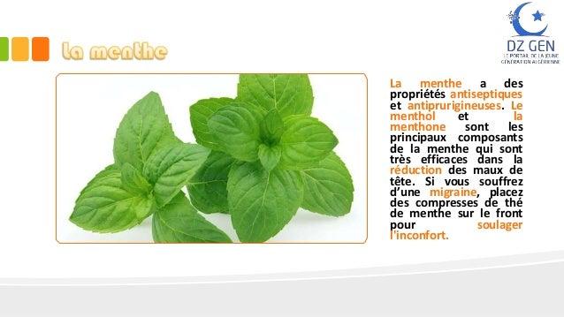 Tout un monde de plantes pour traiter la migraine - Plante pour soigner les verrues ...