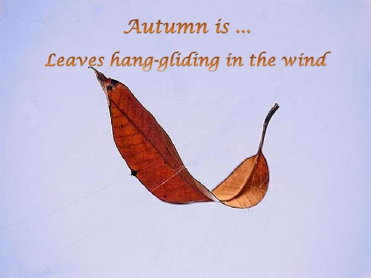 Autumnis...<br />Leaves hang-gliding in the wind<br />