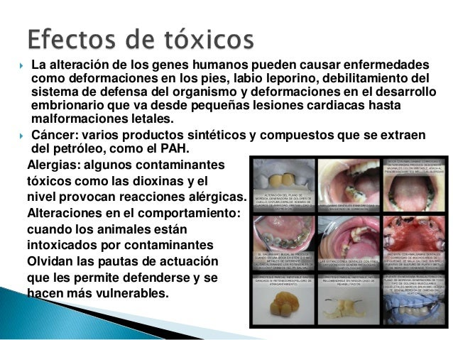  La alteración de los genes humanos pueden causar enfermedades  como deformaciones en los pies, labio leporino, debilitam...