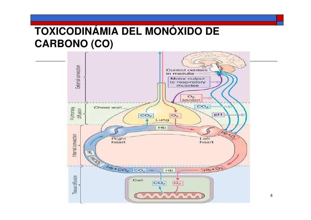 pdf muscarinic