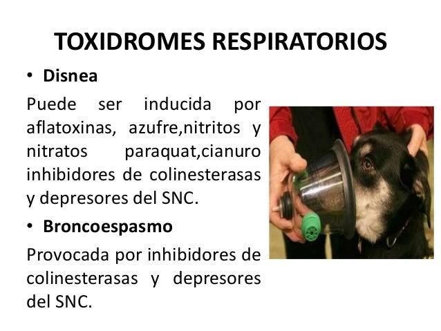 TOXIDROMES RESPIRATORIOS • Disnea Puede ser inducida por aflatoxinas, azufre,nitritos y nitratos paraquat,cianuro inhibido...