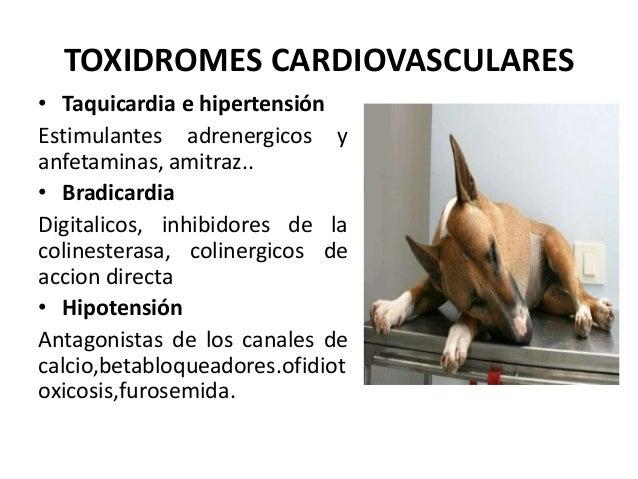 TOXIDROMES CARDIOVASCULARES • Taquicardia e hipertensión Estimulantes adrenergicos y anfetaminas, amitraz.. • Bradicardia ...