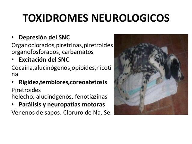 TOXIDROMES NEUROLOGICOS • Depresión del SNC Organoclorados,piretrinas,piretroides organofosforados, carbamatos • Excitació...