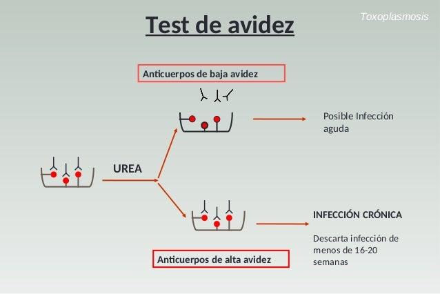 Test De Avidez Toxoplasmosis Download