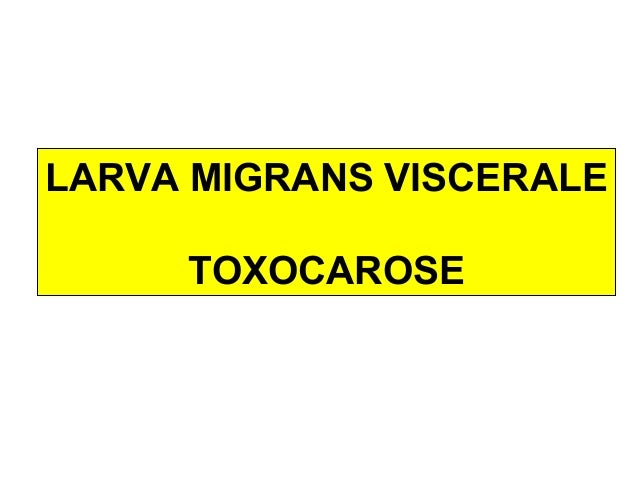 LARVA MIGRANS VISCERALE     TOXOCAROSE