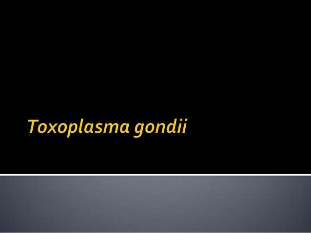     Toxoplasma gondii pertama kali ditemukan oleh Nicole dan Manceaux tahun 1908 pada limfa dan hati hewan pengerat Cten...