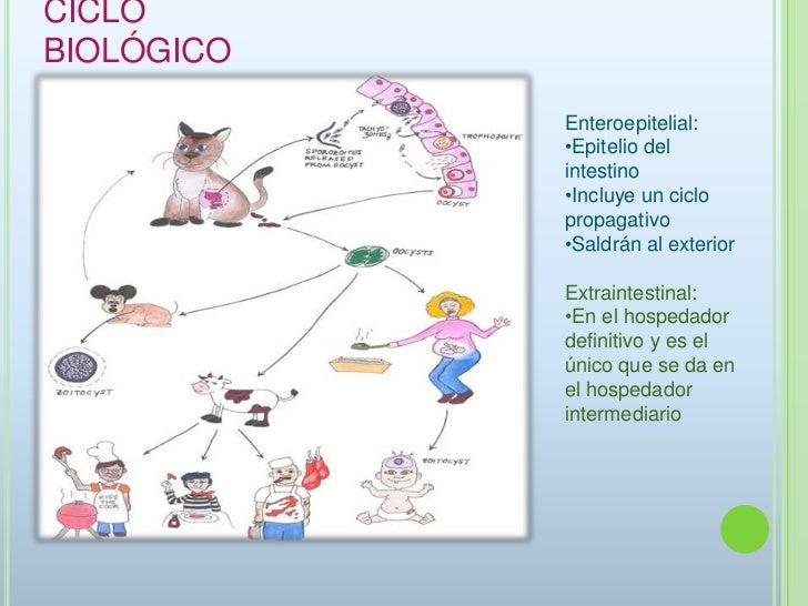 Los parásitos simplísimos no la persona