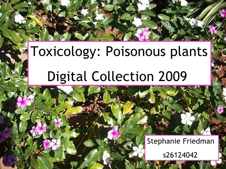 Toxicology: Poisonous plants Digital Collection 2009 Stephanie Friedman  s26124042