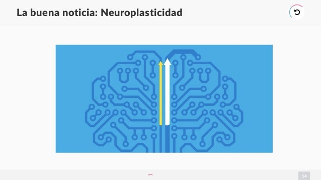 14 La buena noticia: Neuroplasticidad )