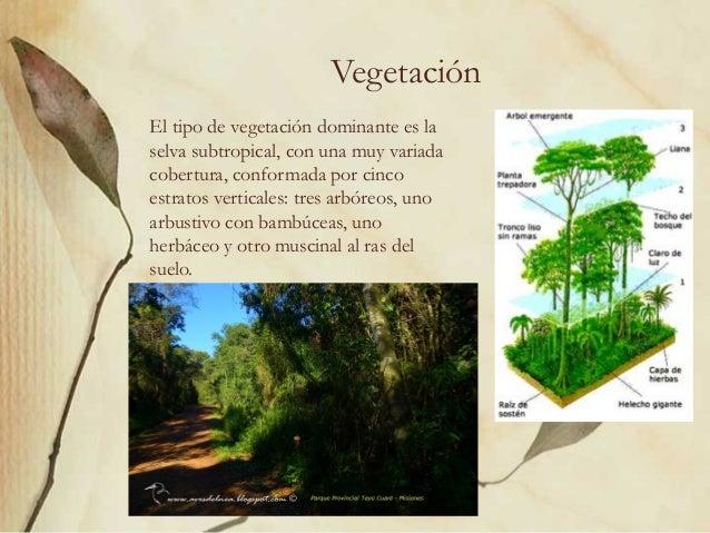 Selva Misionera Ambiente E Impacto Ambiental