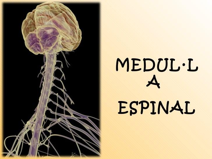 MEDUL·LA  ESPINAL