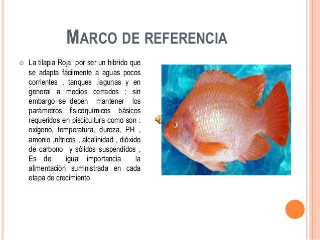 Proyecto producci n y comercializaci n de tilapia roja for Piscicultura tilapia roja