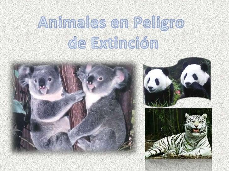 Animales en Peligro<br /> de Extinción<br />