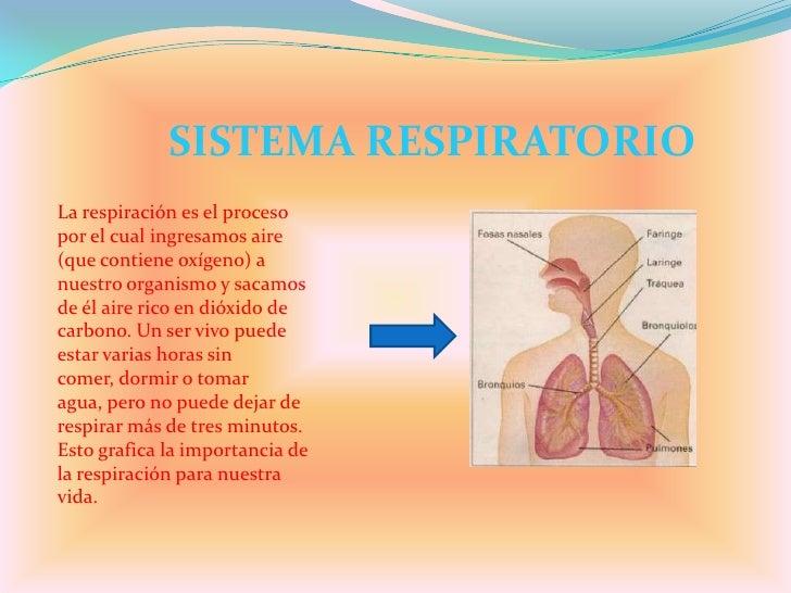 SISTEMA RESPIRATORIO<br />La respiración es el proceso por el cual ingresamos aire (que contiene oxígeno) a nuestro organi...