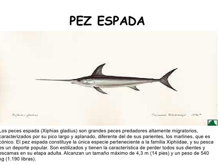 Trabajo final for Curiosidades del pez espada