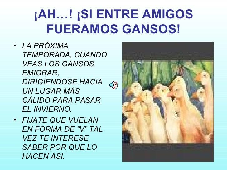 ¡AH…! ¡SI ENTRE AMIGOS FUERAMOS GANSOS! <ul><li>LA PRÓXIMA TEMPORADA, CUANDO VEAS LOS GANSOS EMIGRAR, DIRIGIENDOSE HACIA U...