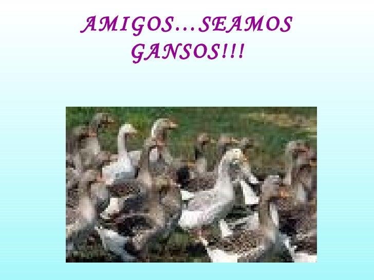 AMIGOS…SEAMOS GANSOS!!!