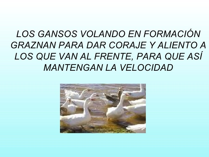 LOS GANSOS VOLANDO EN FORMACIÓN GRAZNAN PARA DAR CORAJE Y ALIENTO A LOS QUE VAN AL FRENTE, PARA QUE ASÍ MANTENGAN LA VELOC...