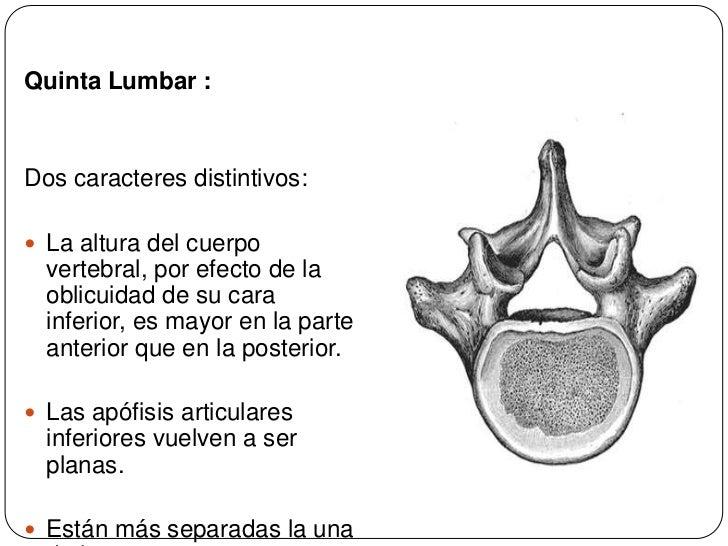Fantástico 5ª Vértebra Lumbar Molde - Anatomía de Las Imágenesdel ...