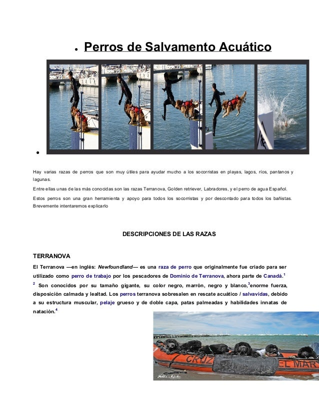 ● PerrosdeSalvamentoAcuático●Hay varias razas de perros que son muy útiles para ayudar mucho a los socorristas en playa...
