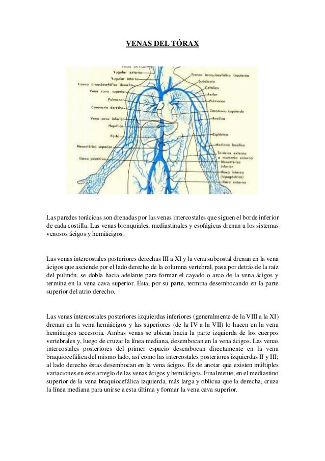 Trabajo anatomia en grupo venas