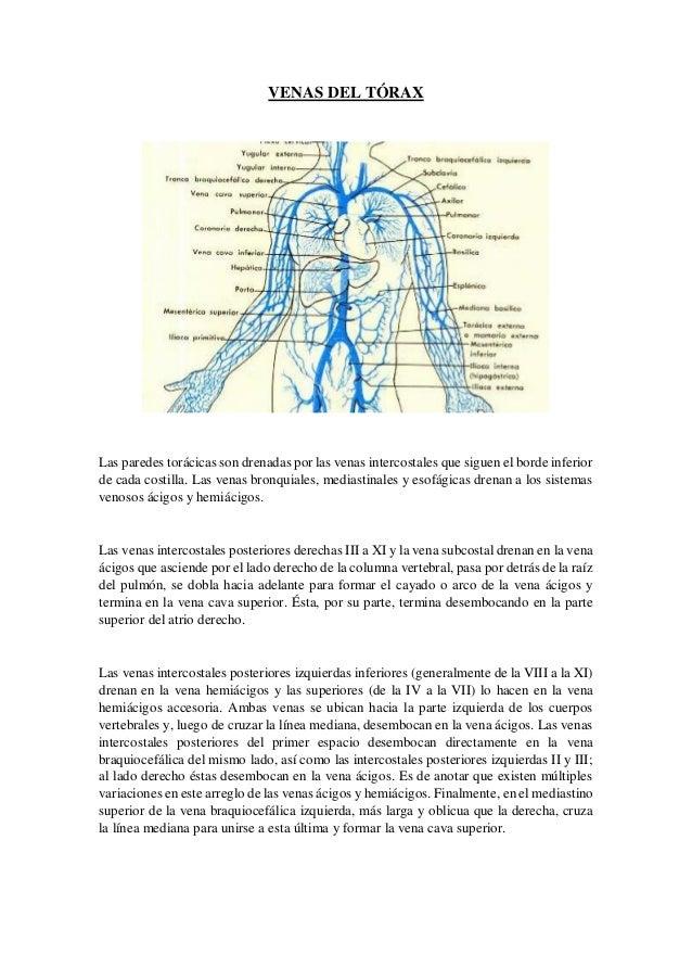 Excelente Innominada La Anatomía Venosa Molde - Anatomía de Las ...