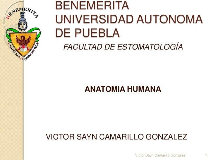 BENEMERITA UNIVERSIDAD AUTONOMA DE PUEBLA   FACULTAD DE ESTOMATOLOGÍA        ANATOMIA HUMANAVICTOR SAYN CAMARILLO GONZALEZ...