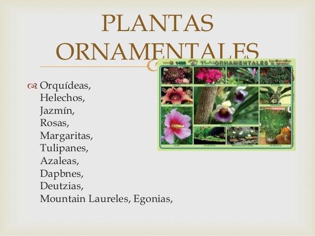 Agricultura urbana for Concepto de plantas ornamentales
