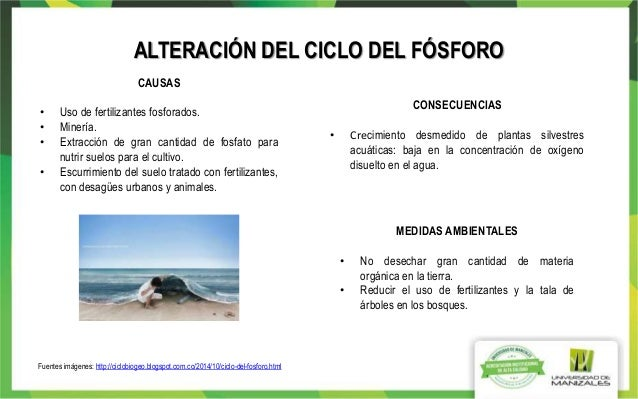 Trabajo Colaborativo Ciclos Y Biomas Ecologia Wiki 2