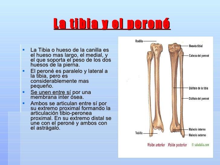 Bonito Anatomía De La Pierna De Prensa Ornamento - Anatomía de Las ...