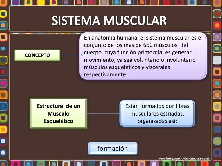 En anatomía humana, el sistema muscular es el                      conjunto de los mas de 650 músculos delCONCEPTO        ...