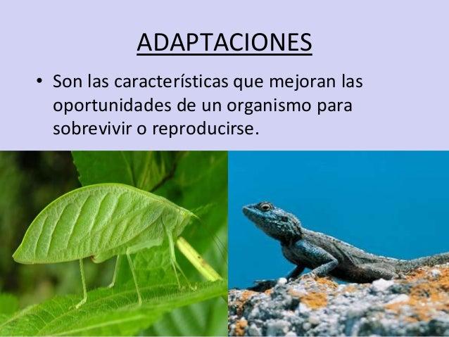 ADAPTACIONES• Son las características que mejoran las  oportunidades de un organismo para  sobrevivir o reproducirse.