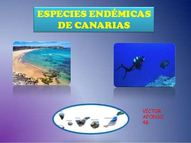 ESPECIES ENDÉMICAS DE CANARIAS  VÍCTOR AFONSO 4B