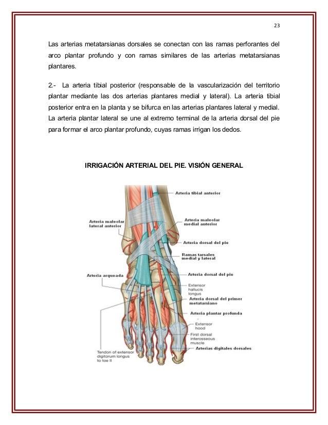 Trabajo de biomecanica del pie y tobillo final 1