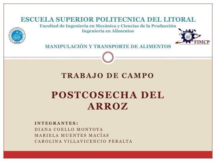 TRABAJO DE CAMPO<br />POSTCOSECHA DEL ARROZ<br />INTEGRANTES: <br />Diana Coello Montoya<br />Mariela Muentes Macías<br />...