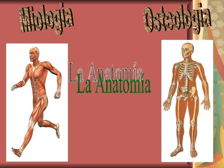 Osteologia Miologia La Anatomía