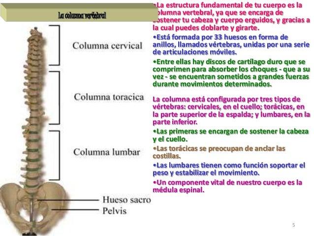 huesos diapositivas 5 638