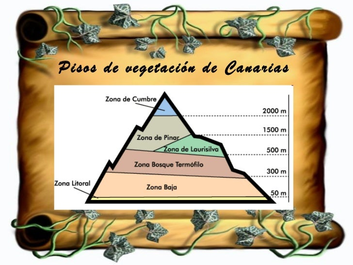 Humboldt y los pisos de vegetaci n for Pisos de vegetacion canarias