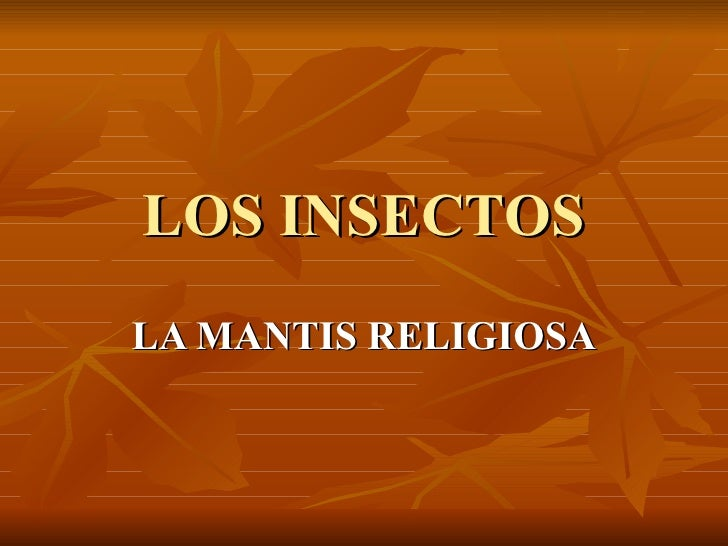 LOS INSECTOS LA MANTIS RELIGIOSA