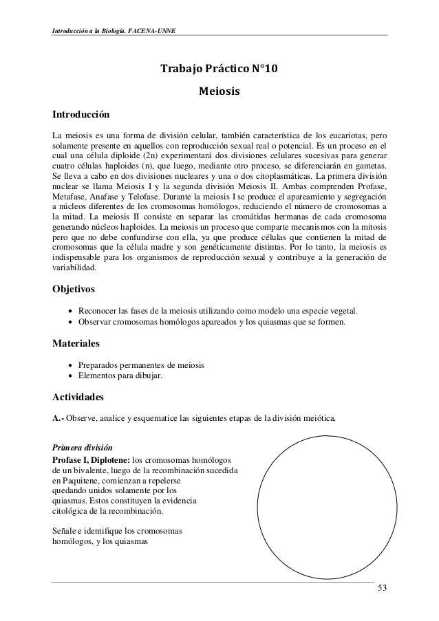 Único Etapas De La Hoja De Trabajo De La Meiosis Galería - hojas de ...