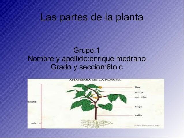 Las partes de la plantaGrupo:1Nombre y apellido:enrique medranoGrado y seccion:6to c